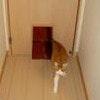 ペットドア 猫用のドア 犬用ドア